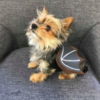 Halloween Kostüm Hund Katze Fledermausflügel Tutorial